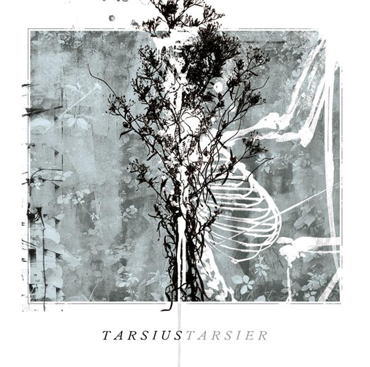Tarsius Tarsier / Ceremonia de Atadura de Manos  / Ceremonia de Atadura de Manos