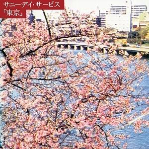 サニーデイ・サービス / 東京 20th anniversary BOX